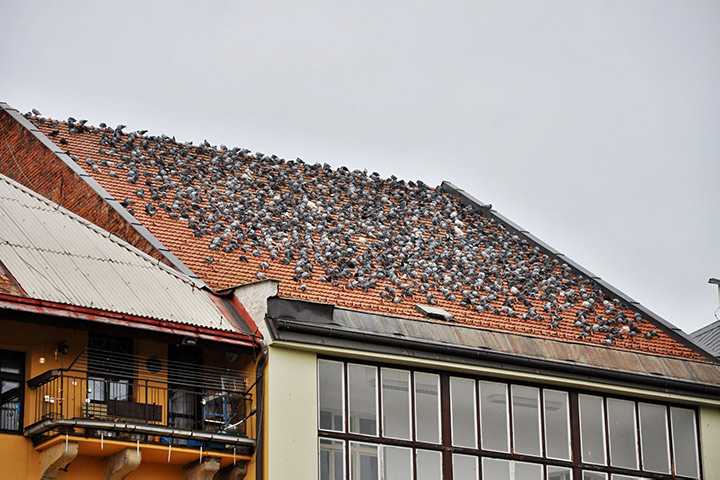 A2B Pest Control are able to install spikes to deter birds from roofs in Pinner.