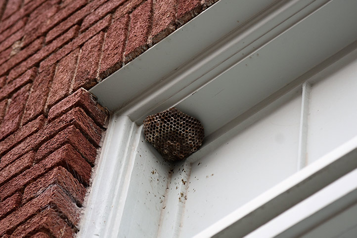 We provide a wasp nest removal service for domestic and commercial properties in Pinner.